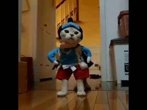 Costumes for Dogs and Cats