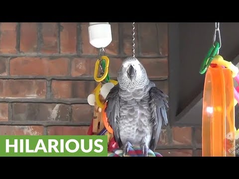 Parrot with discriminating tastes refuses sweet potato