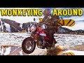 Monkeying Around / Angeles Crest Highway / Honda Monkey / MotoGeo Adventures