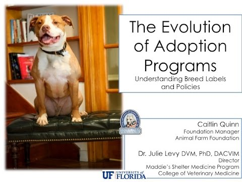 Evolution of Adoption Programs, Part 1: Taking Breed Out of the Equation