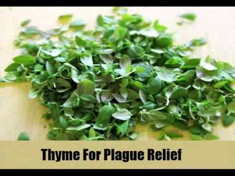 7 Effective Herbal Remedies For Plague