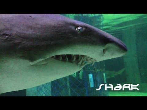 Shark Close Look