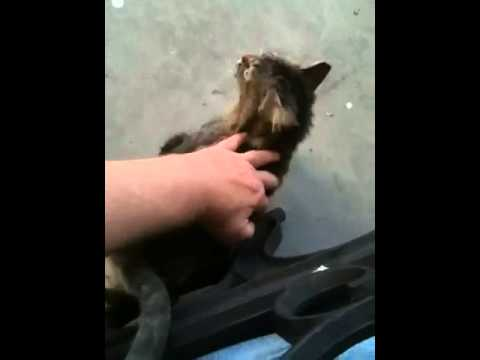 How to Handle a Feral Cat.
