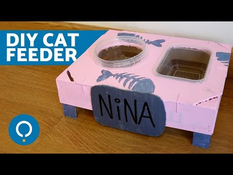 DIY Cat Food Bowl 😺 Crafts for Cats