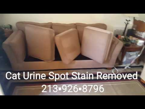 Upholstery Steam Deep Restoration Cleaning | Cat Urine Removed | Sofa Couch Cleaning | El Segundo CA