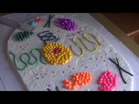 SCIENCE PROJECTS BY CLASS 8 STUDENTS 09 ANIMAL AND PLANT CELLS