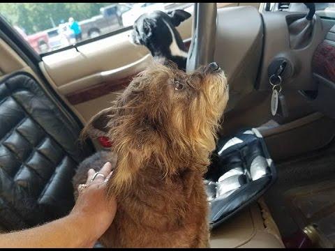 Grand Theft Fido: Dogs steal car, crash into Walmart