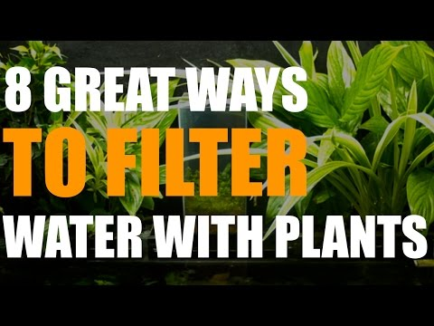 DONE  8 Great Ways to Filter Water with Plants