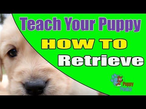 How to Teach a Puppy to Retrieve