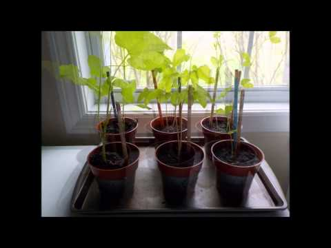 Olivia's Plant Growth Science Project