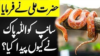Allah Ne Saanp Ko Kyun Paida Kiya | Hazrat Ali (R.A) Ka Farman | SpeakOut