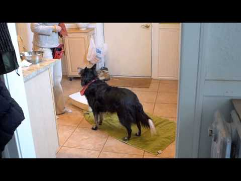 Training Dogs to Wash Their Paws