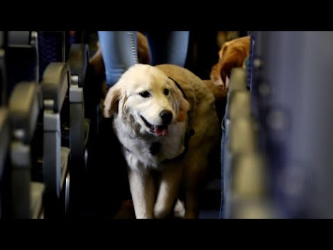New airline regulations on service dogs
