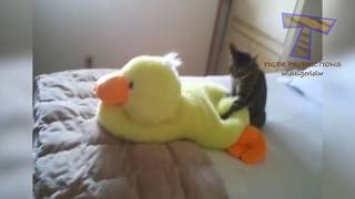 PREPARE to LAUGH - Funny CATS, but like NOTHING YOU