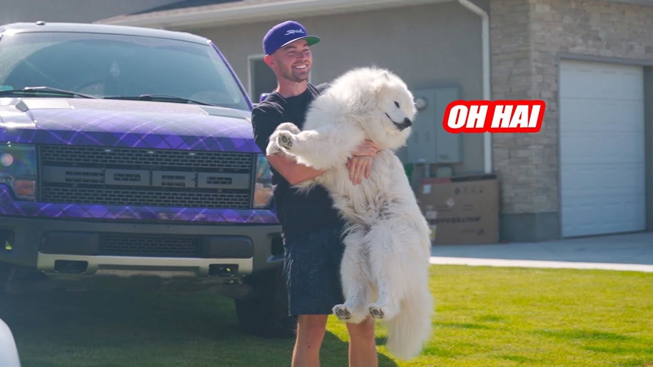 STRADMAN'S DOG OSKAR BEING ABSOLUTELY ADORABLE FOR 6 MINUTES STRAIGHT! W/ ALEX CHOI