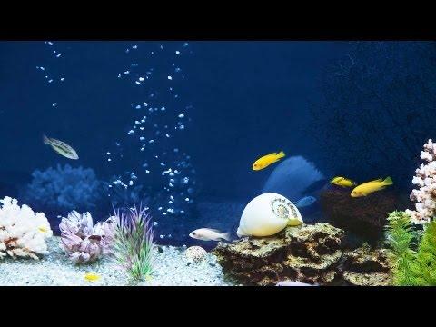 Is Tap Water OK in Saltwater Fish Tank? | Aquarium Care