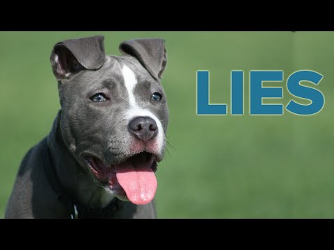 8 Pit Bull Lies You Might Believe