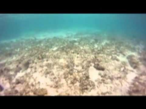 Snorkeling off Turtle Island, Fiji