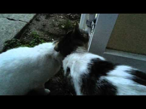Getting the stray cats to get along