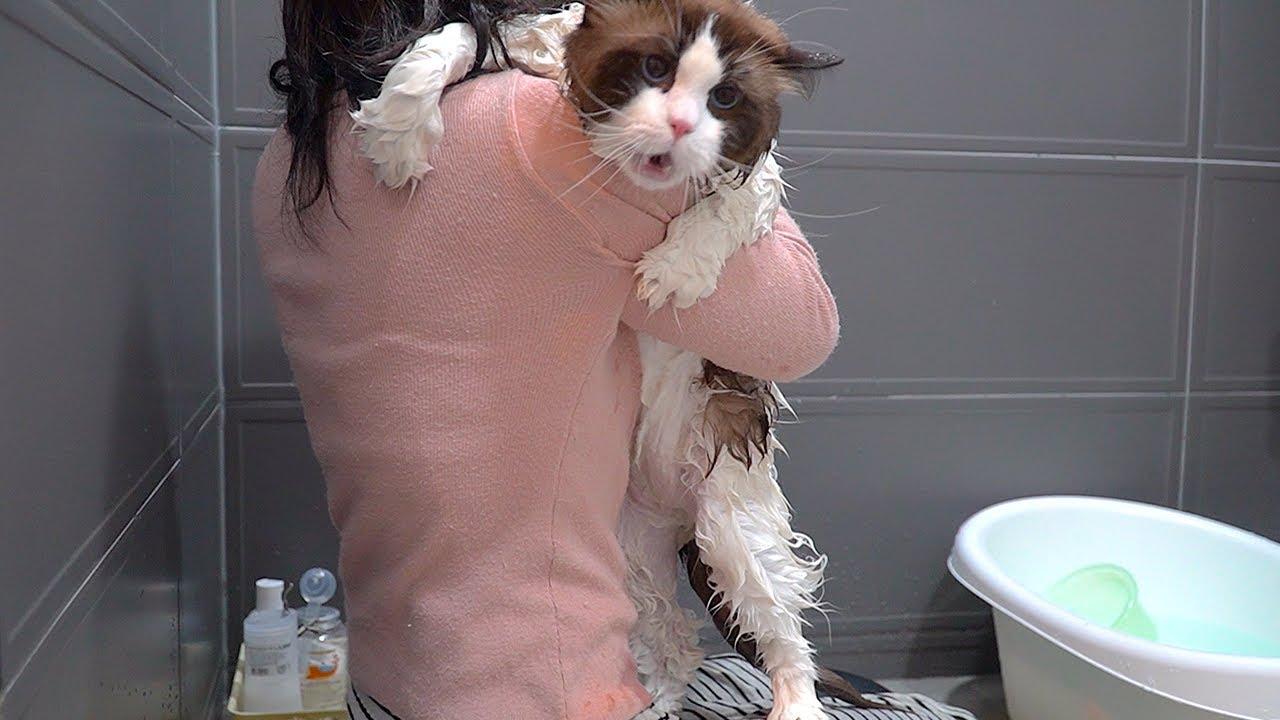 괴성이 난무하는 고양이 목욕 현장