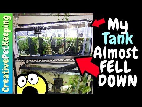 My Aquarium almost FELL DOWN 😱