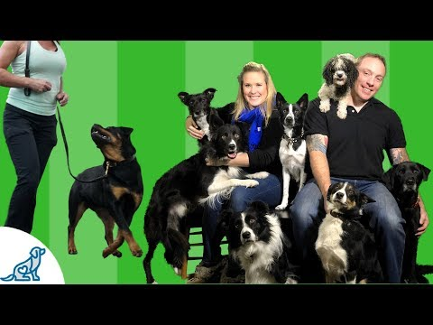 Dog Trainer Tips- Be A Better Dog Trainer, With Less Training