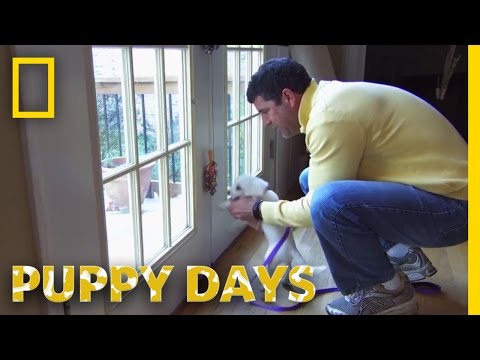 The Bell Training Technique | Puppy Days