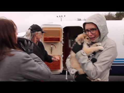 Transport Dogs Arrive by Plane