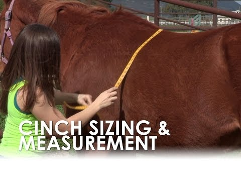 How To Measure For A Horse S Cinch Size Without A Saddle