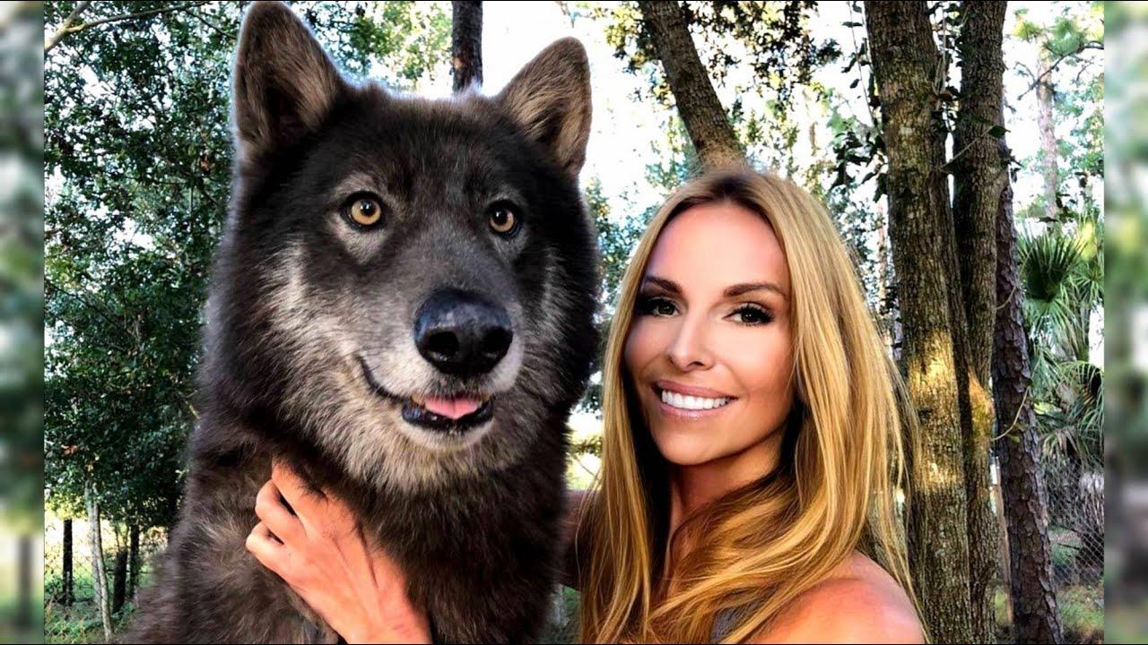 CAN YOU TRAIN A WOLF? كيف تدرب الذئب