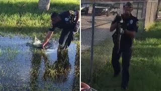 Cop Grabs Baby Alligator With His Bare Hands Near a School