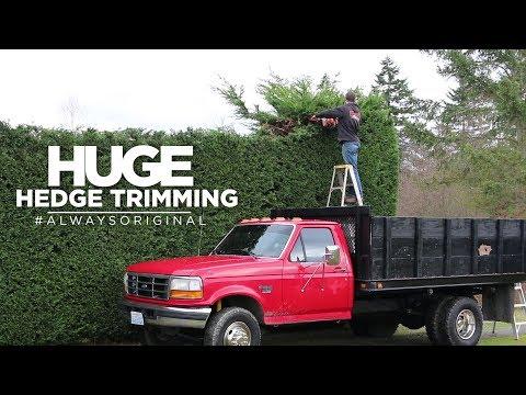 Huge Hedge Trimming Job
