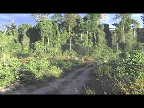 Brazil: monitoring Amazon deforestation
