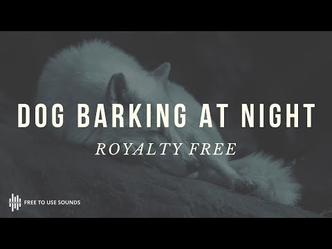 Street Dog Barking At Night TIme! Sounds of Cambodia!