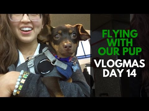 Successfully Flying With a Puppy to NJ - Story Time ❤️🎄 | VLOGMAS Day 14
