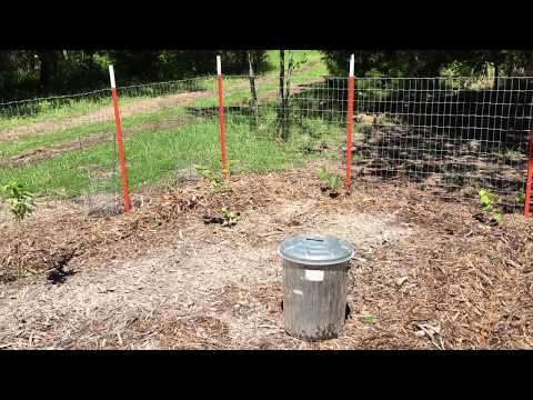 Using Wood Ash in Your Garden