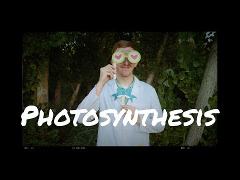 How Do Plants Eat? What is Photosynthesis?