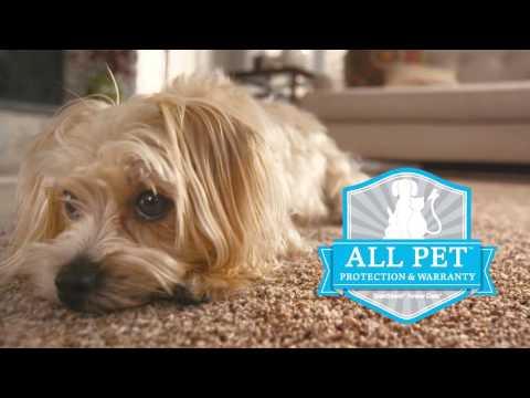 Best Carpet for Pets: SmartStrand Forever Clean