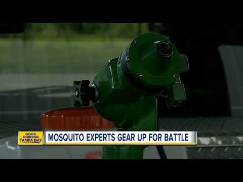 Mosquito experts warn of extra-buggy summer