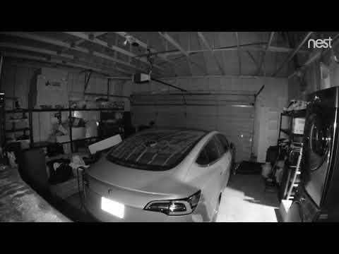Cat vs Tesla Model 3
