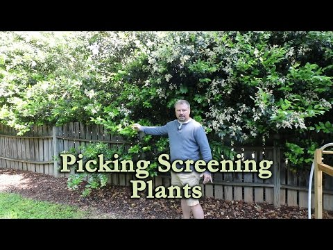 How To Use A Mix Of Screening Plants To Make Your Neighbor Go Away (Privacy Screen)
