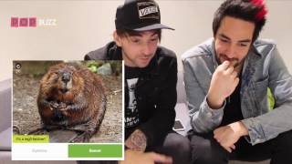 "All Time Low Take Our ""Alex Gaskarth's Eyebrow Or A Beaver?"" Quiz"