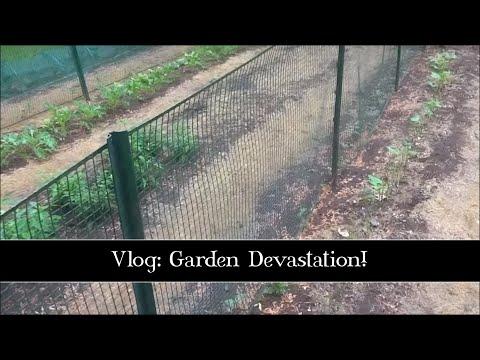 Garden Devastation, May 31st, 2015