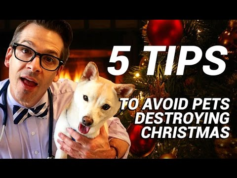 5 Tips To Avoid Pet Fails During Christmas