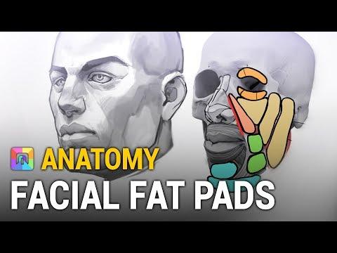 Anatomy Secrets - Facial Fat Pads (ART School)
