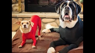 Leotards For Dogs Exist — And Dogs Love Them
