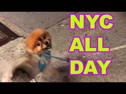 NYC All Day, Croissants, Fails, Pomeranians, One Eyed Cats Vlog