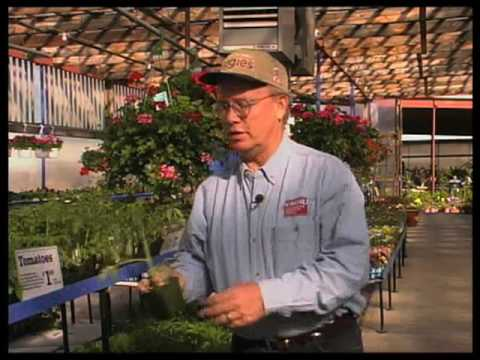 How To Pick Plants And Trees At A Nursery
