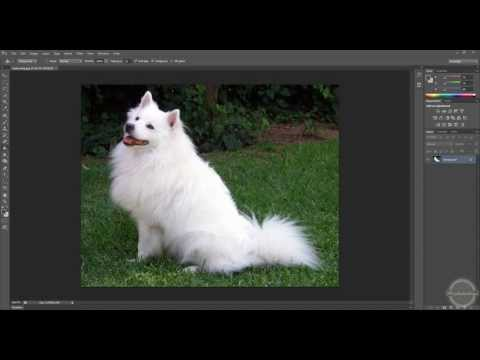 Tutorial, how to cut out a hairy dog or head ...(photoshop cs6)