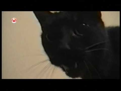 ★ Awesome Cat doing the Blues